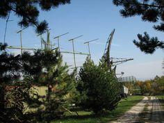 Utility Pole, Plants, Plant, Planets