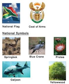 National Symbols of South Africa National Symbols, National Flag, Coat Of Arms, South Africa, Modern Art, Brownie Ideas, African, The Incredibles, Fat Bombs