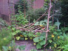 Zelfgebouwd pompoenenbed