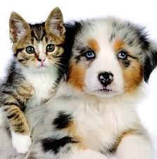 #Ambassador #Animal #Hospital: Care Your All Pets