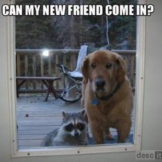 I'd like to hug the raccoon, too