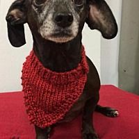Pin On Dachshund Rescue