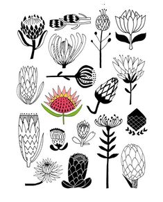 Flower illustrations for art journals and creative scrapbooks Protea Art, Protea Flower, Flowers, Art Floral, Motif Floral, Illustration Botanique, Illustration Art, Flower Illustrations, Fleur Protea