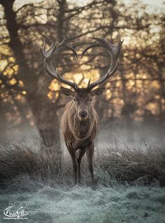 Spirit of the year to come - Pinned by Mak Khalaf Share the love Animals dawndeerforestfrostlovemiststagsunrisewildlifewinterheart shaped antlers by maxellis