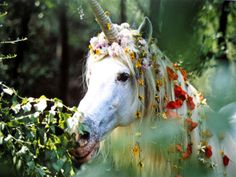Legend Movie Unicorn | This one makes me think of what a princess might find as she wandered ...