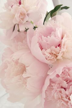 Super Ideas For Wedding Flowers Roses Peonies Florists Peonies Wallpaper, Flores Wallpaper, Amazing Flowers, Pretty In Pink, Beautiful Flowers, Beautiful Pictures, Pink Roses, Pink Flowers, Tea Roses