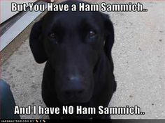 funny animal memes, animal pictures with captions, funny animals no ham sammich is bad Animal Captions, Funny Animal Memes, Dog Memes, Funny Dogs, Funny Animals, Cute Animals, Smart Animals, Hilarious Sayings, Funny Memes