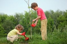 Migratory birds like the black and white warbler and ruby-throated humming bird are heading north. This spring, as they fly over Broward County, Florida, they may notice more than 10,000 new trees planted in the County since their last trip. Tree Planting photo Last summer, the National Wildlife...