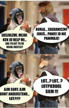 Pin by Paulina Kijewska on Memy Really Funny Memes, Wtf Funny, Polish Memes, Weekend Humor, Funny Mems, Quality Memes, Bad Mood, Sarcastic Humor, Best Memes