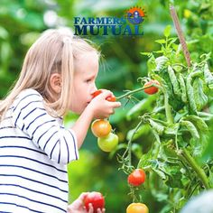 Are you interested in planting? Here in South Carolina, Fall is the perfect time to start doing so. There are fewer pests and it's still warm, and when it gets a bit cooler it usually comes with the rain. #PlantingTip: Vegetable do very well during this time! Planting Vegetables, Fresh Vegetables, Farm Insurance, South Carolina, Garden Plants, Farmer, Rain, Backyard, Tips
