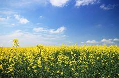今日の空模様  #写真 #写真撮ってる人と繋がりたい #写真好きな人と繋がりたい #風景#風景写真#カメラ男子 #カメラ女子 #はなまっぷ hokkaido #japan #japanigram #japan_of_insta #japan_daytime_view #icu_japan #igersjp #zekkeijapan #wounderful_places #cool #canon #camera #cooljapan #wp_japan #wp_flower #daily_photo_jpn #sky #instasky #sky_lovers #flower #flowermagic #flowerslovers #flowerstagram http://gelinshop.com/ipost/1522194917055701184/?code=BUf7DZOAqDA