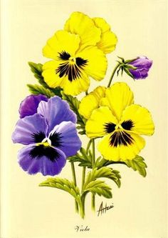 Bluish-purple and yellow pansies Lily Painting, Acrylic Painting Flowers, Watercolor Flowers, Folk Art Flowers, Vintage Flowers, Flower Art, Art Floral, Illustration Botanique, Illustration Blume