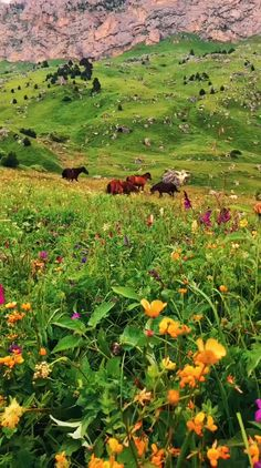 Science Discover Wild horses with beautiful scenery FunnyFoto beauty Most Beautiful Animals Beautiful Horses Beautiful Horse Pictures Beautiful Gif Beautiful Scenery Horse Photography Nature Photography Nature Gif Nature Videos Beautiful Photos Of Nature, Beautiful Nature Wallpaper, Beautiful Places To Travel, Beautiful Horses, Nature Pictures, Amazing Nature, Beautiful Landscapes, Animals Beautiful, Beautiful Gif