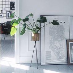 Green elegance by @idestrup #fermliving #plantstand #greenliving #brass #danishdesign