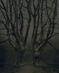 The guardian trees
