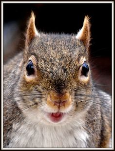 chatterbox squirrel has stories to tell