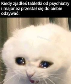 Wszystkie memy z neta :v # Humor # amreading # books # wattpad Bad Memes, Dankest Memes, Reaction Pictures, Funny Pictures, Avatar Ang, Polish Memes, Weekend Humor, Funny Mems, Weird Stories