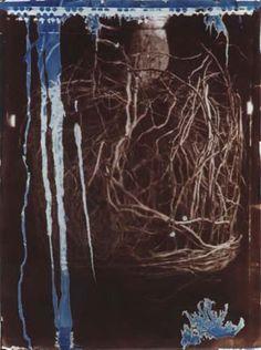 Francis Baker / Pot Bound Root © / Cyanotype & Van Dyke
