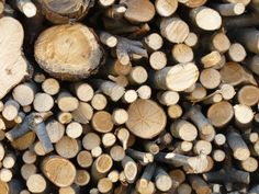The City Slicker's Guide to Felling Trees and Chopping Wood By APN - Thu May am For professional {tree felling services Survival Life, Survival Food, Survival Prepping, Emergency Preparedness, Survival Skills, Bushcraft Camping, To Build A Fire, Tree Felling, Seasoned Wood