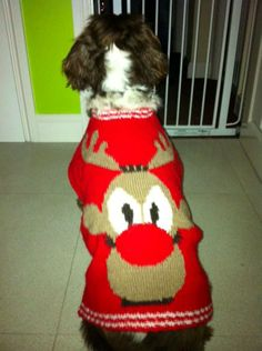 Close knit family: Festive gran knits 28 matching Christmas jumpers for her family (including the dog!)