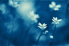 little things blue