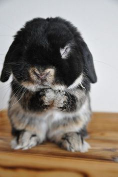 A white and black bunny standing on its hind legs with its front paws in a prayer position with its eyes closed.
