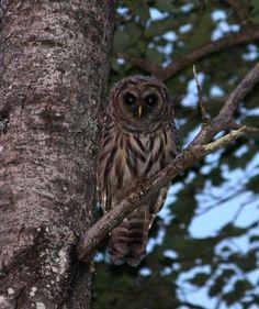 Anne Houston SullivanThe Owl Pages December 1, 2014 ·    Kennebunkport Maine summer 2013