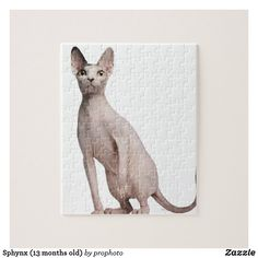 Sphynx (13 months old) jigsaw puzzle 13 Month Old, Make Your Own Puzzle, Cat Photography, Custom Gift Boxes, Domestic Cat, Sphynx, Animal Skulls, Nature Animals, Colour Images