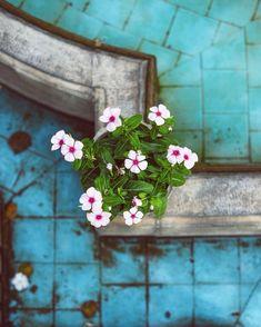 Hotel Bee - Travel tips and Travel Guides Flower Phone Wallpaper, Cute Wallpaper Backgrounds, Cute Wallpapers, Dream Catcher Art, Persian Garden, Persian Girls, Persian Culture, Beautiful Flowers Wallpapers, Iranian Art