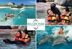 Sea Life Park, Oahu Hawaii - I swam with the Sea Lions :)