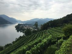 Tenuta San Giorgio, une cave tessinoise dans le top 100 du Gault et Millau - SWISS WINE DIRECTORY Lugano, Bed And Breakfast, Geo, Cave, Outdoor, Ride Or Die, Outdoors, Caves, Outdoor Games