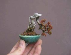 They might be more surprised to see the bigger challenges that come from growing a tiny version of the bonsai tree like shohin bonsai and mame bonsai.