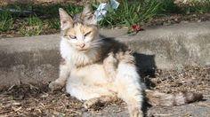 La Fondation soutient près de 200 associations de protection des « chats libres ». Ces structures, constatent alors que l'euthanasie ou le déplacement des colonies de chats est inefficace contre la...