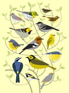 Scott Partridge - illustration - new world warblers