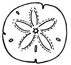 Sand dollar illustration by Ainsley Bonham, used as a chapter icon and asterisk in SAND DOLLAR: A Story of Undying Love by Sebastian Cole Sand Dollar Tattoo, Stained Glass Patterns, Line Drawing, Drawing Ideas, Beach Themes, Sea Creatures, Quilting Projects, Rock Art, Watercolor Cards