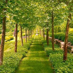 My backyard - English Style Country Garden Formal Gardens, Outdoor Gardens, Garden Paths, Garden Landscaping, Backyard Walkway, Landscaping Ideas, Forest Garden, Woodland Garden, Garden Trees