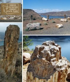The Gingko Petrified Forest in Eastern WA is a must stop & hike. It was really amazing to see.