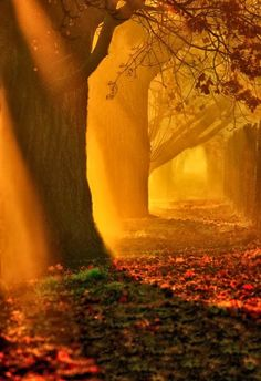 Autumn's Mystical Forest.....<3