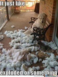 Dog with exploded pillow