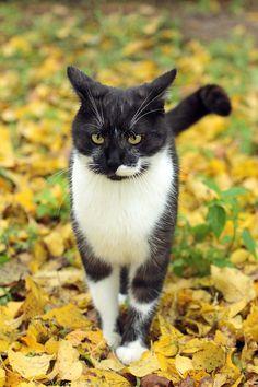 White Splotched Black Cat