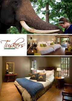 s situated right next to the Elephant Sanctuary Hartbeespoort Dam - South Africa. Elephant Sanctuary, Great Places, South Africa, Couch, Travel, Home Decor, Settee, Viajes, Decoration Home