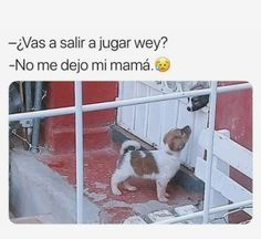 Memes 2 Continuation of memes, for lack of space Here you will find more m… # Humor # amreading … Memes Estúpidos, Memes Status, Best Memes, Funny Memes, Baby Animals, Cute Animals, Pinterest Memes, Cozy Mysteries, Murder Mysteries