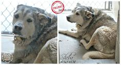 ~~URGENT~~Mesa, Arizona~~~ Senior dog drooled in fright and hid in back of kennel as her owners walked away. ---Call (602)-506-PETS. Days and hours are from 11:00 a.m. to 6:00 p.m. Monday through Friday. On Saturday and Sunday, hours are from 11:00 a.m. to 5:00 p.m.