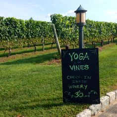 A few mornings a week, Wölffer has Yoga in the Vines. You walk through the vines of Chardonnay grapes to get to a clearing under a tree where you set up your mat for class. Sacred Mountain, Mornings, Vines, Things To Do, Glow, How To Get, Exercise, Yoga, Health