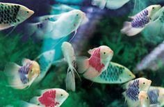 Mika Ninagawa goldfish