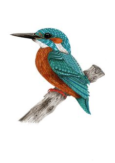 Miniature Kingfisher art prints for nature lovers, Small gift for bird lovers – … – Bird Supplies Kingfisher Tattoo, Kingfisher Bird, Bird Illustration, Small Art, Small Birds, Bird Art, Canvas Art, Art Prints, Nature Prints