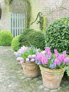 pots of flowering bulbs--love this and want to do it. Now!