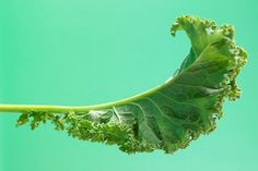 Kale is a member of the cancer-fighting cruciferous family of vegetables and is full of fiber and antioxidants. Read more: http://ti.me/O0s7v8