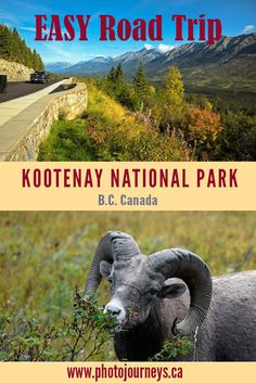 Kootenay National Park, British Columbia, Canada offers attractions including ca. Canada National Parks, Yoho National Park, Parks Canada, Hiking Dogs, Hiking Trails, Easy Day, British Columbia, Columbia Travel, Canadian Rockies