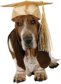 Sensible best dog training tricks Do not buy unless Training Your Puppy, Training Tips, Training Classes, Training Online, Puppy Classes, Puppy House, Dog Beds For Small Dogs, Dog Blanket, Basset Hound